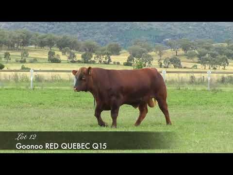 GOONOO RED QUEBEC (AI) (AMF) (MAF) (NHF) (OSF) GSJQ15