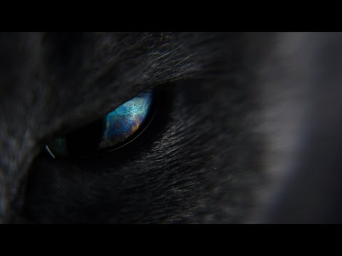 Cat Eye Macro Space