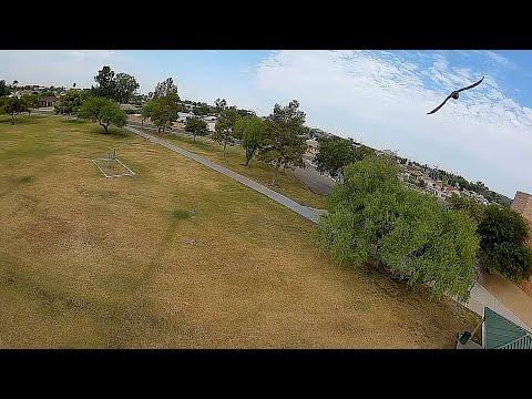 Geprc Rocket Plus DJI Air Unit - FPV 120fps Super Slow Motion Chasin Birds Large Park