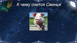 К чему снится Свинья видео -К чему снится Свинья