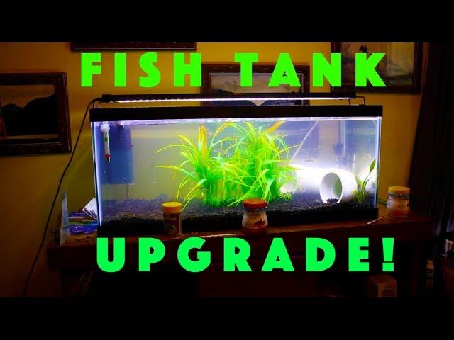 Redesigning the Corydoras/Danio tank!