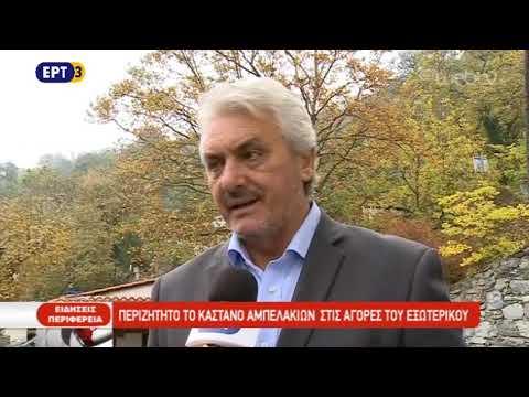 Περιζήτητο το κάστανο Αμπελακίων στις αγορές του εξωτερικού | ΕΡΤ