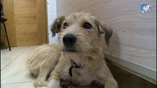 Фонд помощи бездомным животным «Спасение» получит президентский грант на стационар для стерилизованных зверей