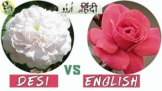 TYPES Of ROSES (Gulab): DESI ROSE Vs ENGLISH ROSE - Classification And Differences - Hindi/Urdu