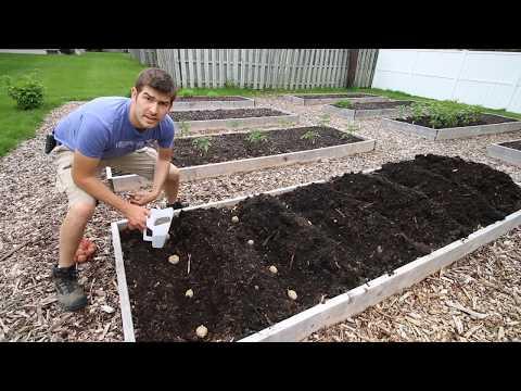 , title : 'Things We do To Ensure HUGE Potato Yields