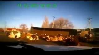 Die besten 100 Videos Kühe ausschütten - Truck Spills Cows All Over The Street