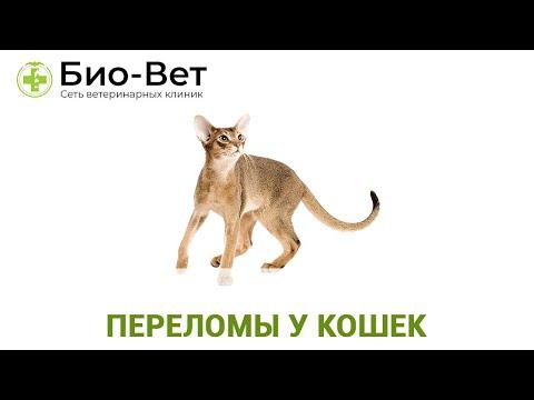 Переломы у кошек. Ветеринарная клиника Био-Вет.
