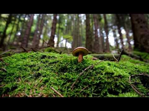 Rimedi di gente per lotta contro un fungo di unghia