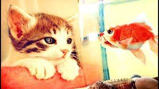 Смешные Kошки и Милые Котята 2019 ♥ Cat Marabacha #31