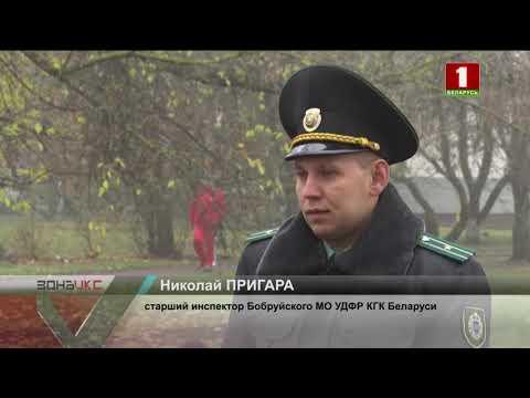 Предприниматель из Бобруйска незаконно заработал более 85 000 рублей на продаже документов. Зона Х