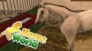 MY NEW HORSE Horse World Lets Play App Game
