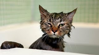 СМЕШНЫЕ КОТЫ  ПРИКОЛЫ С КОТАМИ ТОПовая подборка 2016 ПРИКОЛЫ С КОШКАМИ FUNNY CATS Смешные моменты