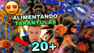 Alimentando Mis 20+ Tarantulas (INCREÍBLEMENTE LOCAS) | Mascotas Exoticas | Tomas Pasie
