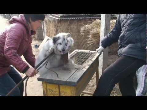 The way Chinese treats animals is disgusting and needs to change!