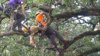 Mr. Davis Simulated Aerial Rescue At 2017 ITCC Tree Climbing Competition
