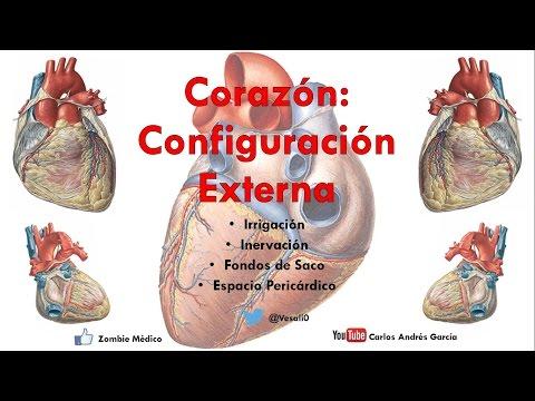 Con exclusión de hipertensión secundaria