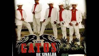 Los Gatos De Sinaloa
