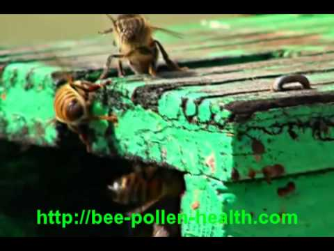 Treatment of prostate adenoma bees