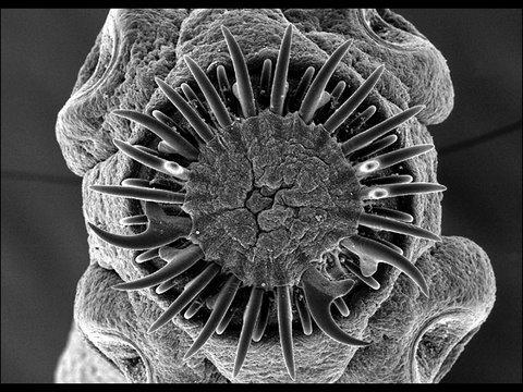 Giardia scaun galben