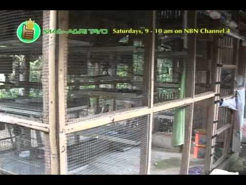 Pagsubok para sa mga halamang-singaw paa