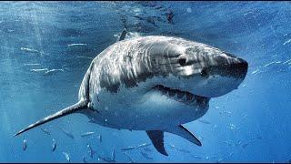 SHARK DIVE - ANDY BRANDY CASAGRANDE IV - ABC4EXPLORE