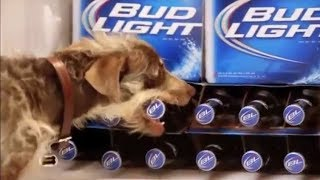 10 Funny Bud Light Dog Commercials