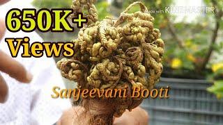 SANJEEVANI BOOTI  KYA HAI ? What Is Sanjeevani Booti In Ramayana (Hindi /Urdu) ?