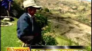 La Grandeza De Nativo: Pequeño Gigante Lucha En Las Alturas De Cajamarca