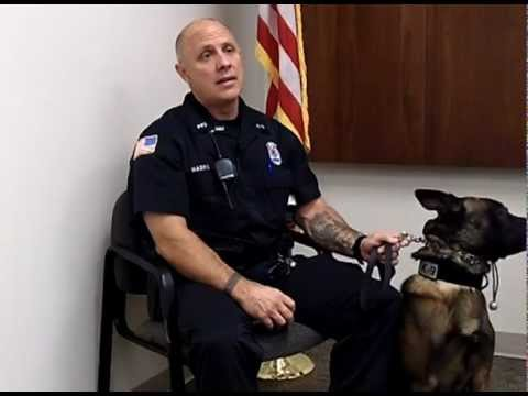 K-9 Police Officer, Career Interview From drkit.org