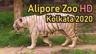 Alipore Zoo Kolkata 2020 (FULL HD)