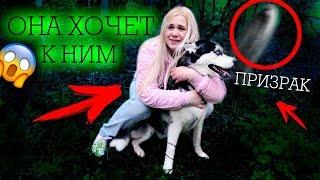 Нельзя слушать этот смех... Я потеряла собаку ПРИВЯЗАЛИ ЛУНУ К ДЕРЕВУ И ИЗДЕВАЛИСЬ! ОНА МЕНЯ ЗАБЫЛА!