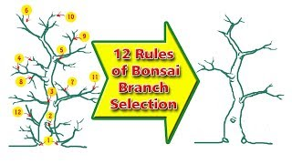 12 Rules to Bonsai Branch Selection, Be the Creator