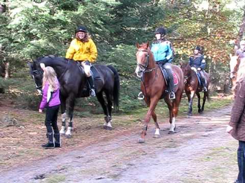 Recreatie ritje op een paard in Wanroij