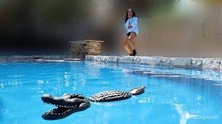 EPIC ALLIGATOR In Pool PRANK ON GIRLFRIEND!!!