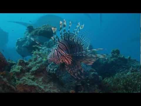 Tigerhai und Co, North  Bahamas,Bahamas