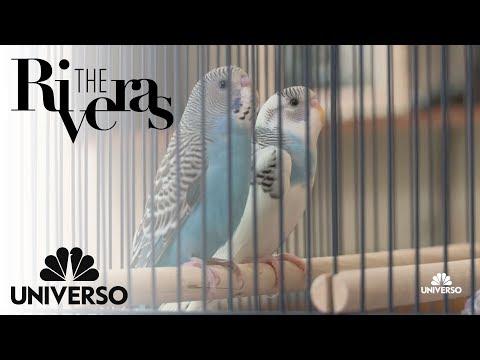 Jacqie adopts two pets | The Riveras | Universo