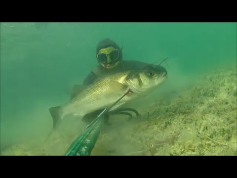 Video che pesca su starobeshevo