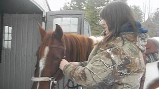 How to: Bridle your horse using a hackamore!