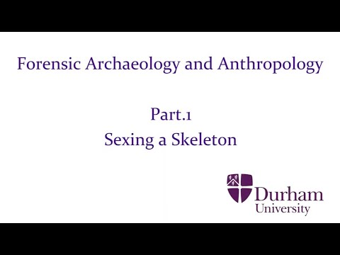 Forensic Archaeology and Anthropology - Part.1: Sexing a Skeleton ...