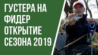 Ловля густеры на фидер  Открытие сезона 2019