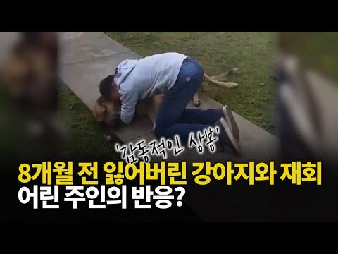 8개월 전 잃어버린 강아지와 재회... 어린 주인의 반응?