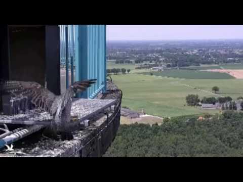 Strange falcon visits - 21.06.17