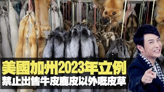 思浩大談美國加州2023年立例,禁止出售牛皮鹿皮以外嘅皮草!(大家真風騷) bji 2.1