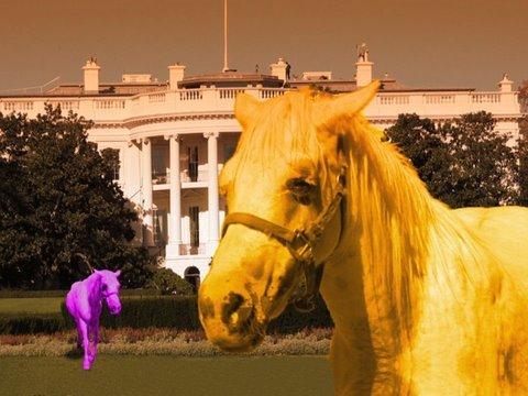 My Little Pony - Kucyki atakują!