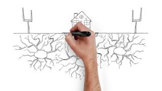 The Importance of Termite Coverage