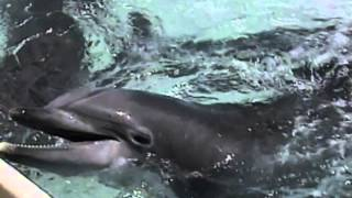 Dolphins Home to the Sea (Trailer): rescued dolphins