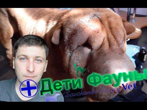 Укусила собака собаку, что делать? Советы ветеринара