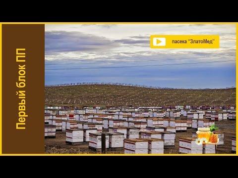 Блок №1. Основные принципы промышленного пчеловодства