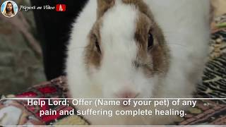 † Prayer For The Healing Of Your Sick Pet🌟   (❤DISCOVER WHAT HAPPENS)