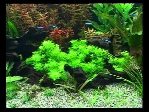 Запуск и дизайн аквариума